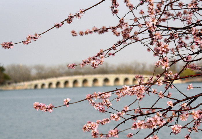 Цветение персика в парке Ихэюань