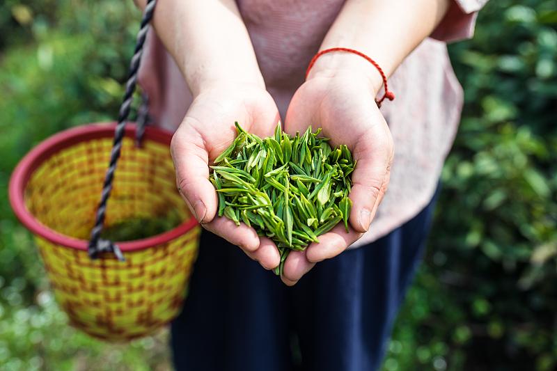 Пандемия не повлияла на ввоз чая из Китая в Россию